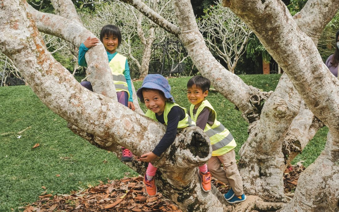 5 Things You Need to Know About Forest School